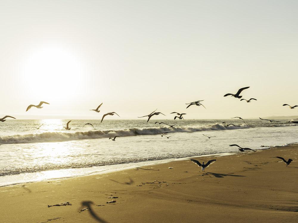 california-photography-dominikbrauch