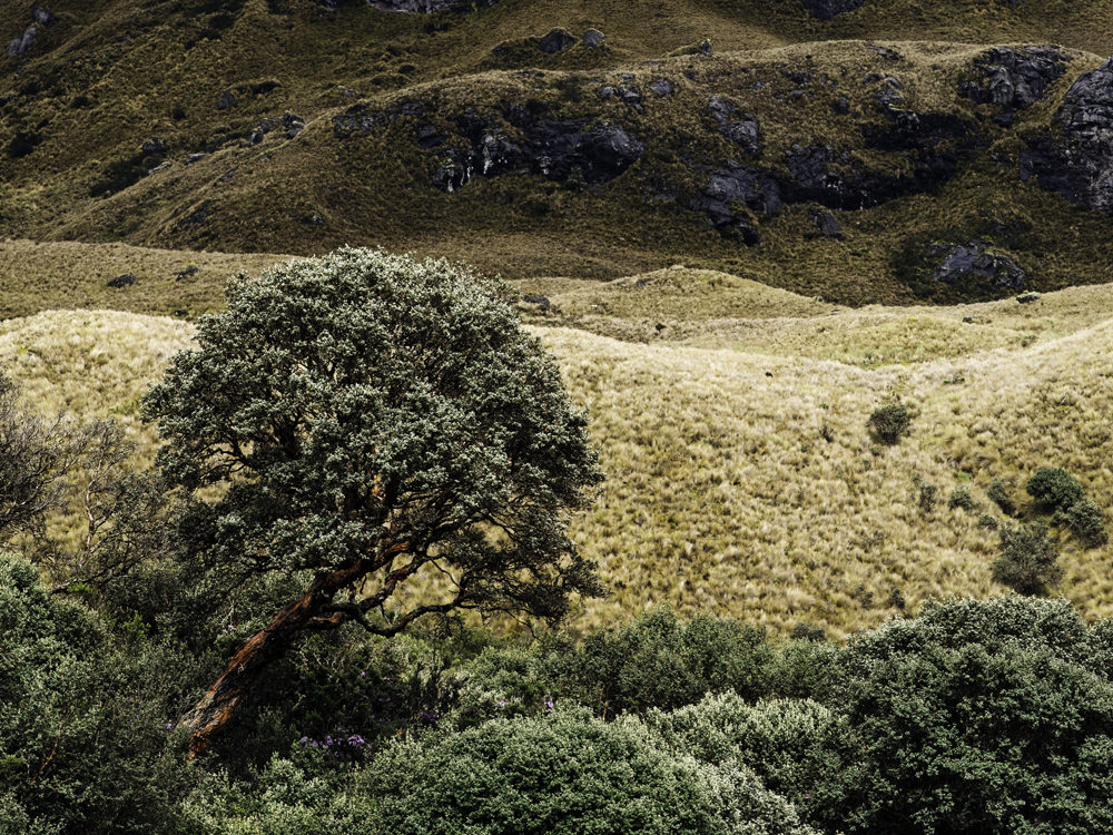 elcajas-ecuador-photographer-dominikbrauch